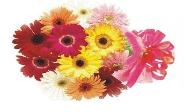 panglici - flori